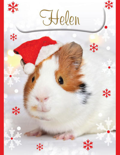 A Personalised Christmas Card, with a red frame, showing a guinea pig wearing a Christmas hat